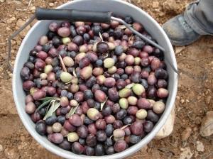 Nahaleen olives