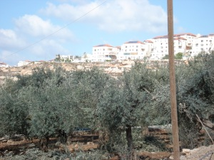 the Palestinian village Nahaleen's olive trees and the illegal Israeli settlement bitar above