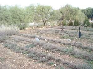 za'atar in berc's garden in till