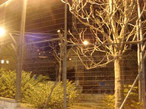 illegal israeli settlement in silwan