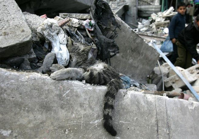 hamas cat killed by israeli terrorists in gaza