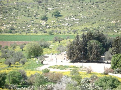 view of palestinian mosque in saffuriyya