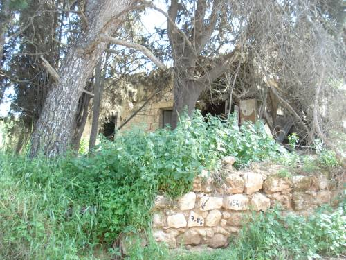palestinian home in saffuriyya