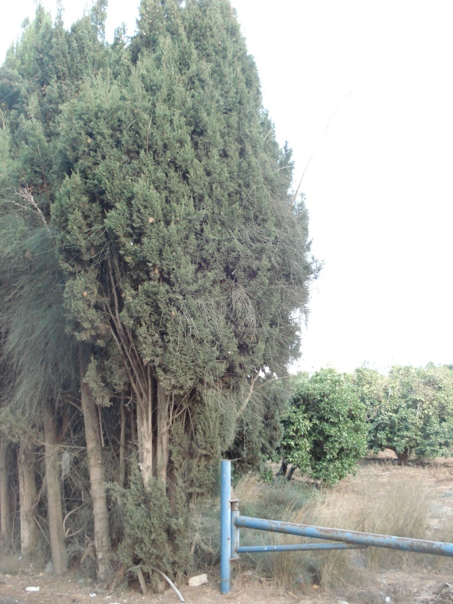 hidden orange groves in qatra