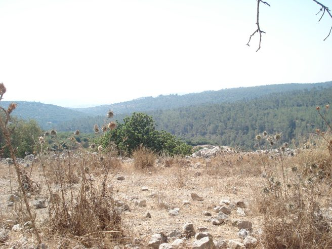 a view from beit itab of the forested over palestinian villages