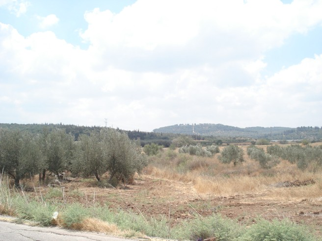 they destroy olive trees too, here in al burayj (and then replant them with the help of diaspora zionists)