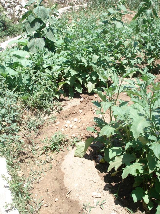 husan garden irrigation system